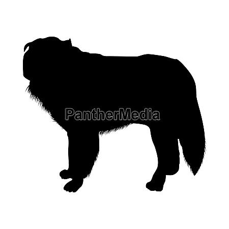 polish sheepdog silhouette