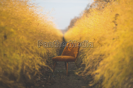 orange chair in asparagus field in