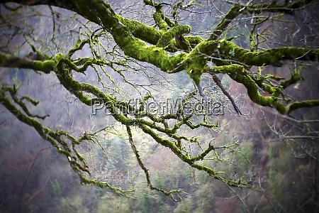 spain gorbea natural park moss grown