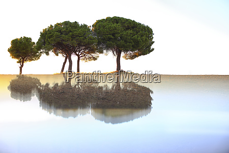 pine trees and reflections