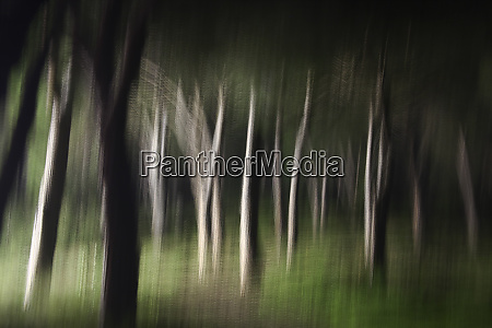 blurred forest