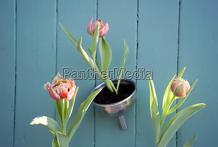 easter decoration flower decoration tulips in