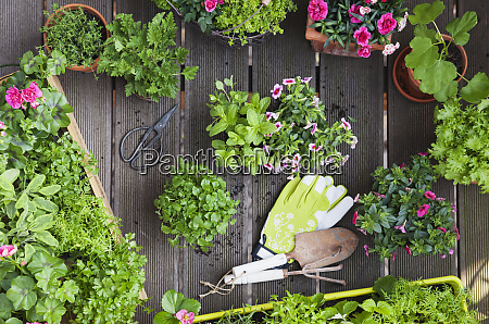 planting herbs and flowers for indoor