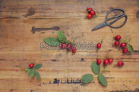 roseships and scissors on wood