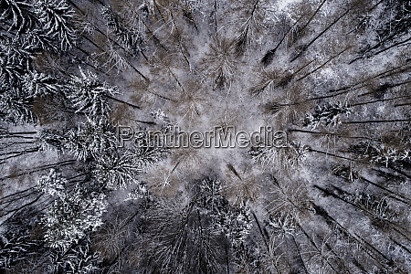 austria wienerwald snowy forest in december