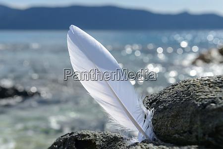 france corsica bonifacio white feather at