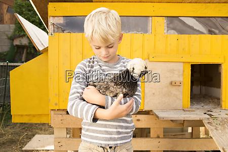 boy holding polish chicken at chickenhouse