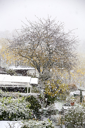 germany wuerzburg allotment garden and snowfall