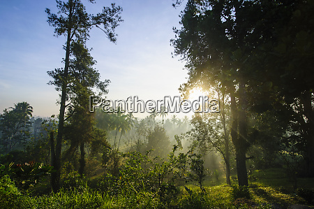 indonesia java early morning view from
