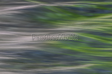 abstract image of foliage reflected into