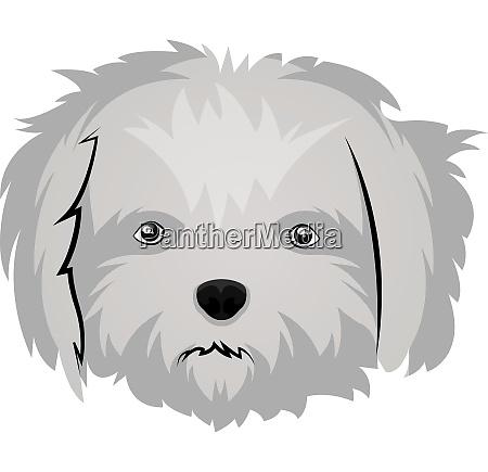 maltese illustration vector on white background