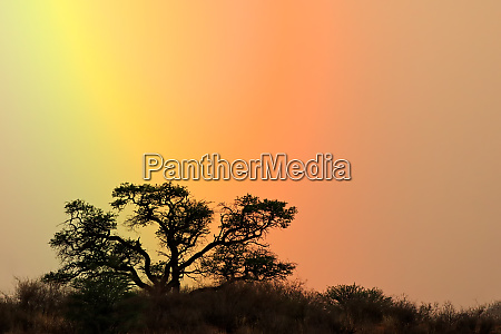 tree silhouetted against rainbow sky