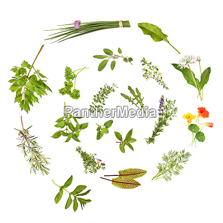 herbs spiral isolated