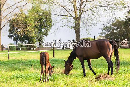 horses stud farm new born foals