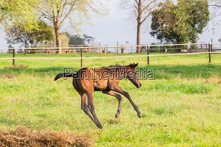 horses stud farm foals countryside