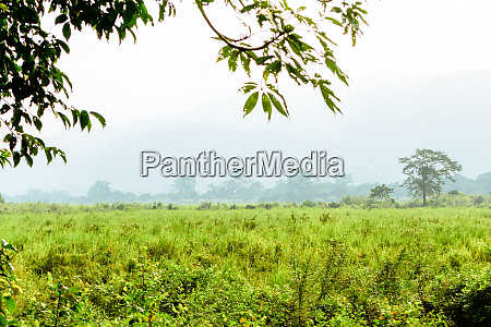 inside view of kaziranga national park