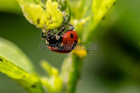 small beetles in my garden
