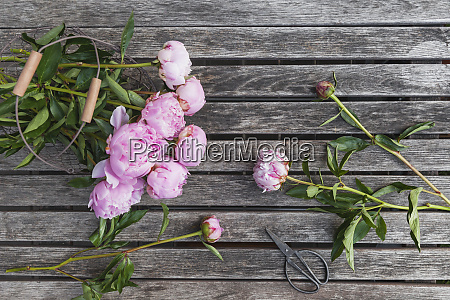peonies in basket on garden table