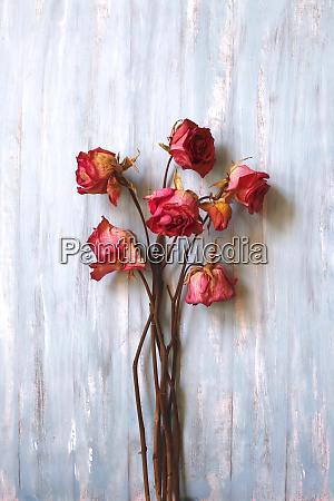 still life dried roses on wood