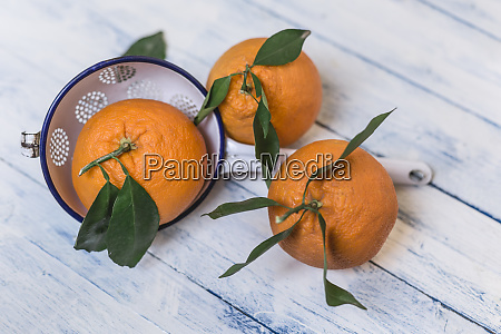 three oranges with leaves and a