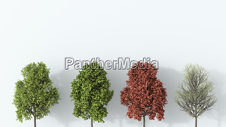 3d rendering tree in the four