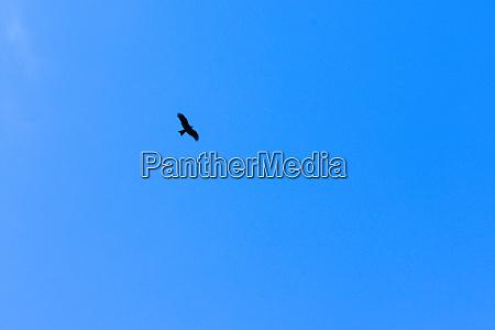 seagull bird in flight on blue