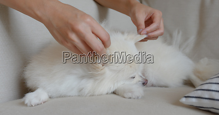 woman cuddle her pomeranian dog