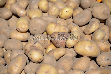 potatoes at the weekly market in