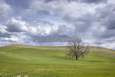 lone tree under cloudy sky in