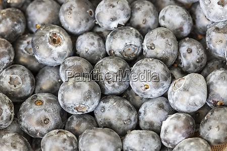 closeup of blue berries