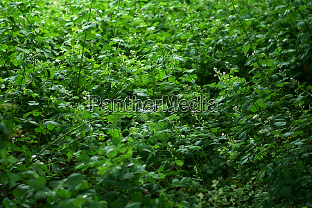thorny scrub and green plants in