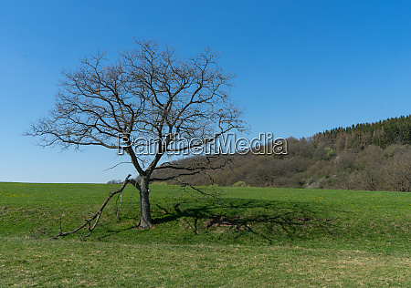 landscape with leafless tree in the