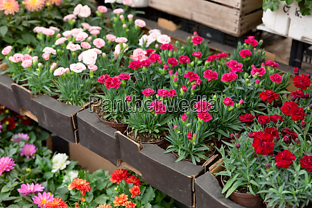 variety of plants and flowers at