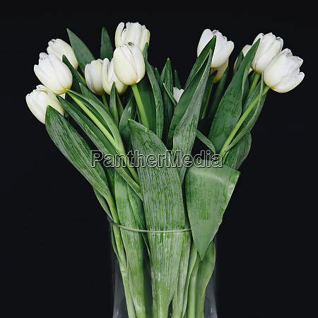 white tulips in a vase against