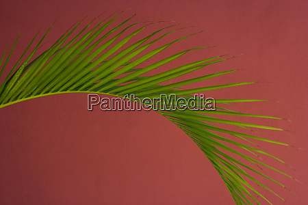palm frond against a red background