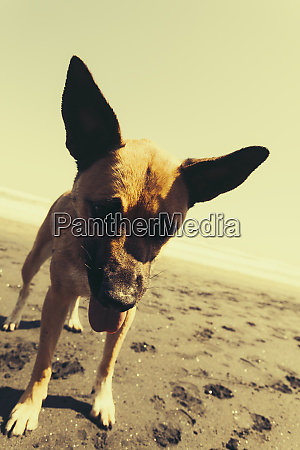 mixed breed dog on beach discovery