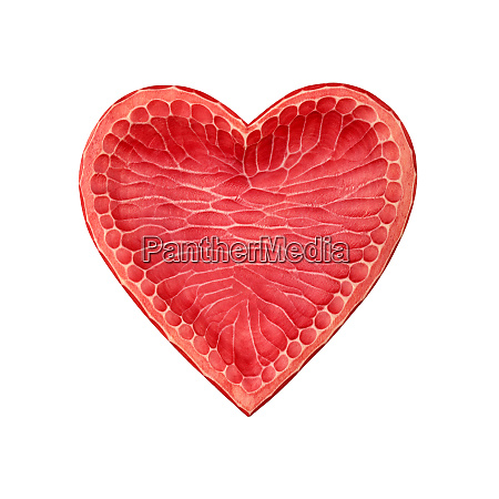 red wooden heart shaped bowl isolated