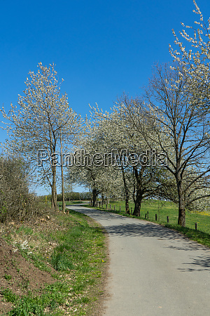 agriculture path with some apple trees