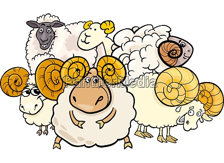 ram and sheep group cartoon illustration