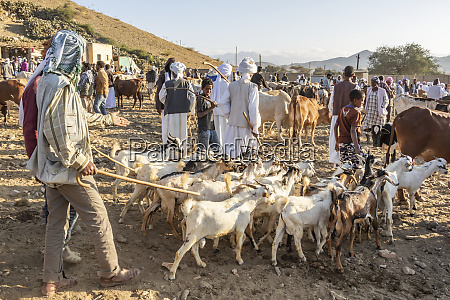 goat herders with their goats at