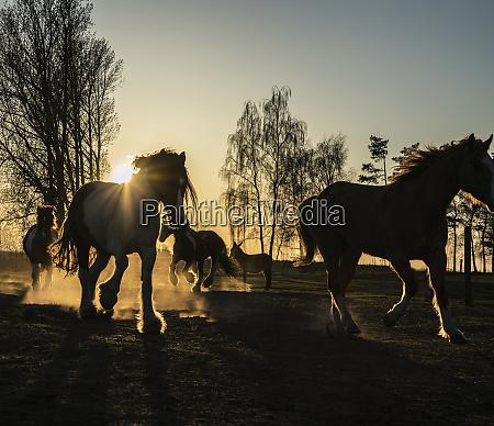 horses running in idyllic pasture at