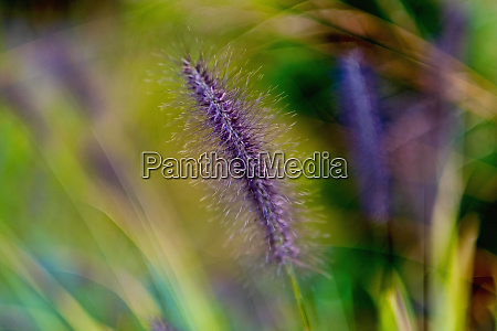 close up detail fuzzy purple flower