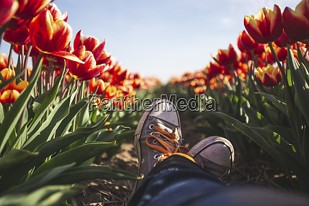 germany womans feet in a tulip
