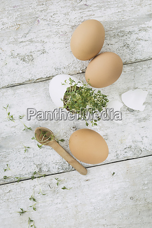 cress in eggshell three brown eggs