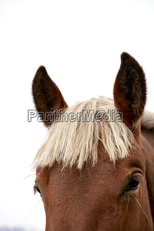 head of horse in front of