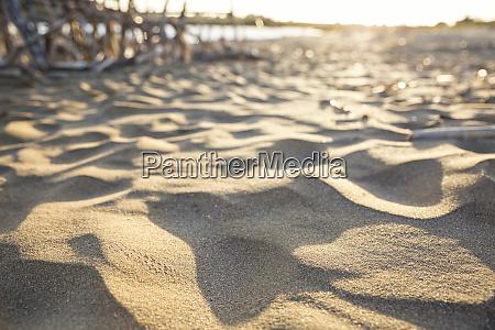 italy sicily eloro beach animal tracks