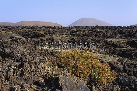 spain canary islands lanzarote los volcanes