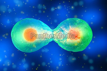 3d rendered illustration cell division