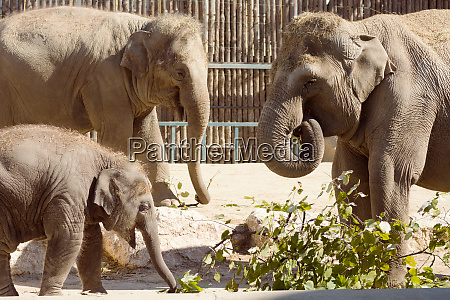 elephant family in zoo