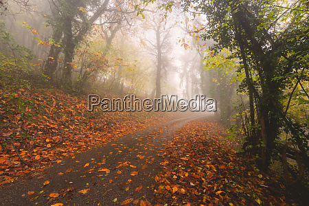 atmospheric autumn road in brescia prealpi